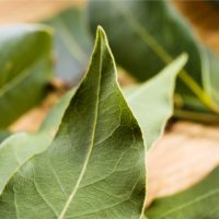 ARCHAEOLOGY OF HERBS & SPICES – Bay Leaves
