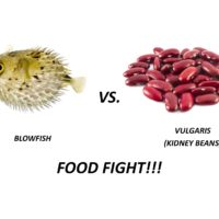 Blowfish vs Kidney