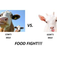 FOOD FIGHT!! MILK – Cow vs. Goat