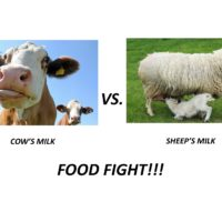 Cow vs Sheep Milk