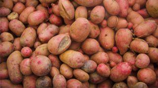 Adirondack potato