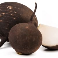 ARCHAEOLOGY OF FRUITS & VEGETABLES – Black Radish