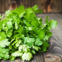 ARCHAEOLOGY OF HERBS & SPICES – Cilantro (Chinese Parsley)