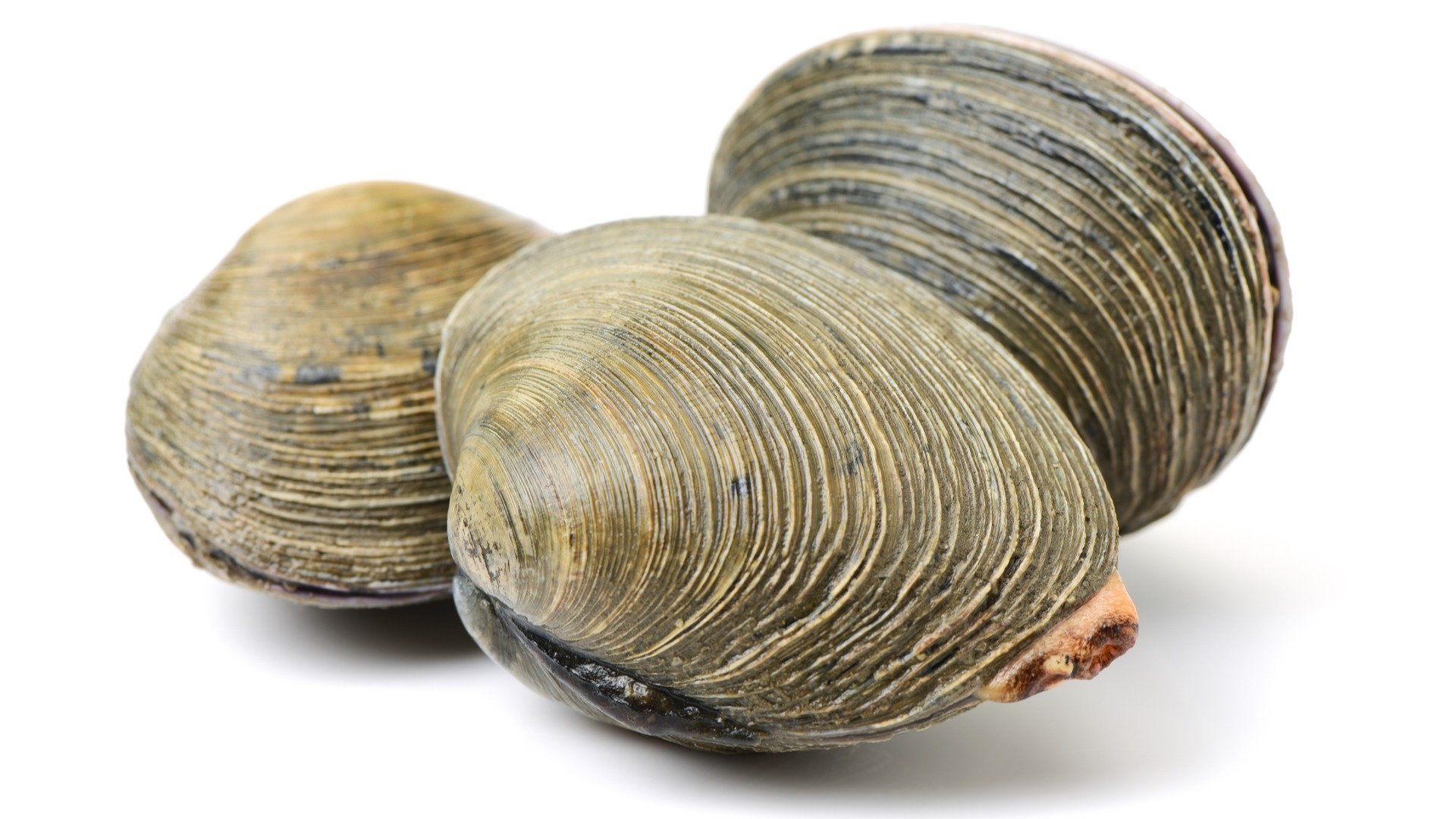 clam, seafood, mollusc, shell, ocean