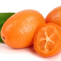 ARCHAEOLOGY OF FRUITS & VEGETABLES – Kumquat