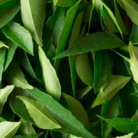 ARCHAEOLOGY OF HERBS & SPICES – Curry Leaves