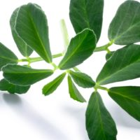 fenugreek, leaves