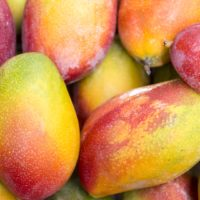 ARCHAEOLOGY OF FRUITS & VEGETABLES – Mango