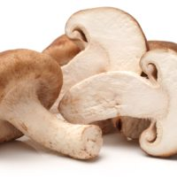 ARCHAEOLOGY OF MUSHROOMS – Shiitake