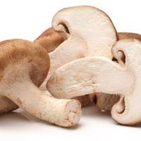 shiitake, mushroom