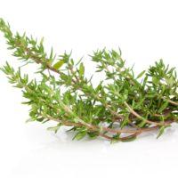 thyme, spice, fresh, herb