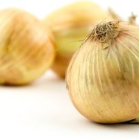 ARCHAEOLOGY OF FRUITS & VEGETABLES – Vidalia Onion (Sweet)