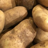ARCHAEOLOGY OF FRUITS & VEGETABLES – Yukon Gold Potato