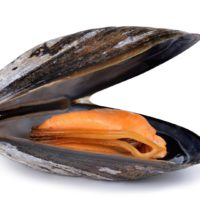 ARCHAEOLOGY OF SEAFOOD – Mussel