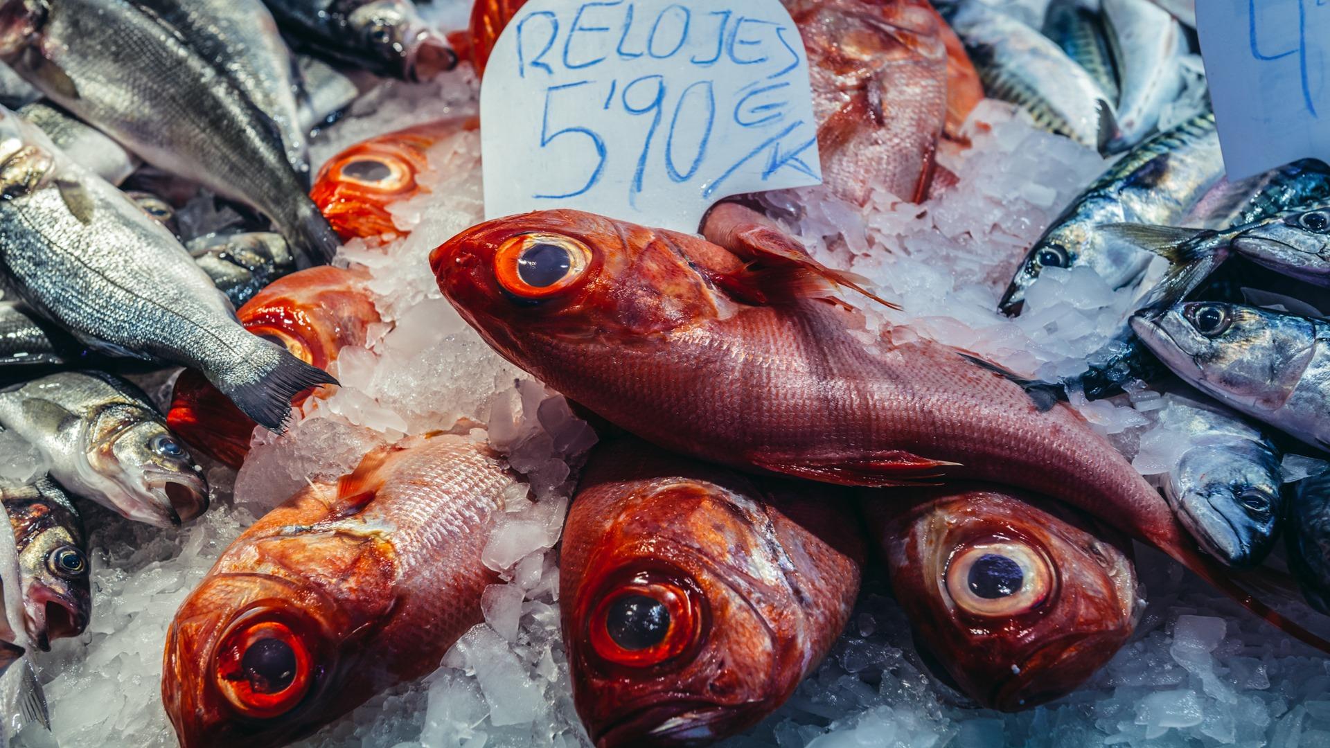 orange roughy, fish